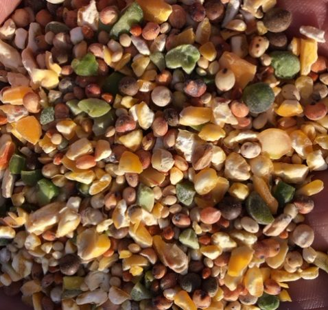 Post-Grower Feeding Options and Tips on Keeping Birds from Wandering